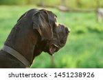 dog with dark fur resting in...   Shutterstock . vector #1451238926