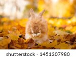 Stock photo cute decorative rabbit in autumn leaves golden autumn in maple leaves rabbit washes 1451307980