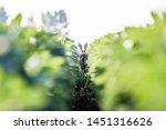 Stock photo european wildlife hare lepus europaeus 1451316626
