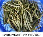 Small photo of Vanilla pods after harvest. Furthermore, vanilla pods must be fermented.