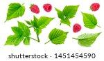 Raspberry Plant Leaves  Cut...