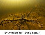 Snag Under Water