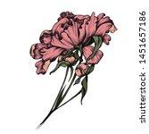 color blossom peony... | Shutterstock . vector #1451657186