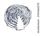 cabbage botanical hand drawn... | Shutterstock .eps vector #1451666270