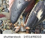 A Dead Porpoises Washed Up Onto ...