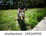 Stock photo cat 145169920