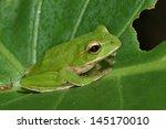 treefrog | Shutterstock . vector #145170010