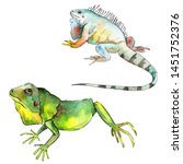 exotic iguana wild animal.... | Shutterstock . vector #1451752376
