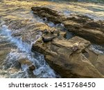 sea lions   seals napping on a... | Shutterstock . vector #1451768450