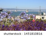 deep violet flowers and the vew ... | Shutterstock . vector #1451810816