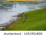 Blue Heron With Fish On The Lake