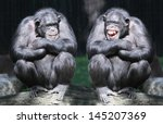 two chimpanzees have a fun. | Shutterstock . vector #145207369