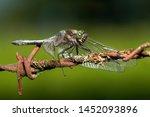 Closeup Vie Of A Dragonfly...