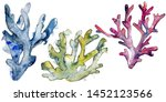 Colorful aquatic underwater nature coral reef. Tropical plant sea and ocean water life element. Watercolor background set. Watercolour drawing fashion aquarelle. Isolated corals illustration element.