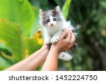 Stock photo beautiful kitten on the palm asian woman is stroking a small kitten 1452224750
