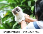 Stock photo beautiful kitten on the palm asian woman is stroking a small kitten 1452224753