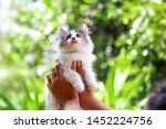 Stock photo beautiful kitten on the palm asian woman is stroking a small kitten 1452224756
