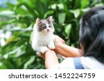 Stock photo beautiful kitten on the palm asian woman is stroking a small kitten 1452224759