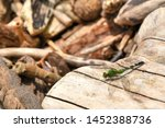 Stock photo isolated closeup of a green snaketail dragonfly on a sun drenched piece of drift wood a side 1452388736