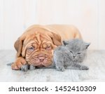 Stock photo puppy hugging kitten on the floor at home 1452410309