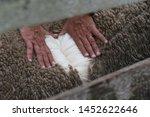 farm worker showing wool fleece ... | Shutterstock . vector #1452622646