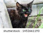 Stock photo a black kitten in the yard saw danger kitten defensive reaction 1452661193