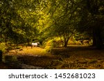 Horses In A Forest Clearing....