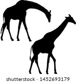 Silhouette Of A High African...