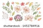 watercolor illustrations.... | Shutterstock . vector #1452784916
