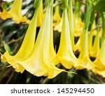 Yellow Flower On Background Of...
