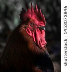 Rooster Portrait   Beautiful...