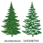 Fir Trees  Summer And Winter...