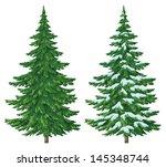Fir Trees  Summer And Winter...