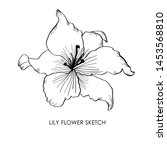 lily flower sketch. vector... | Shutterstock .eps vector #1453568810