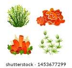 underwater marine flora. marine ... | Shutterstock .eps vector #1453677299
