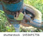Small photo of Cute little tree frog on the water hydrant one spring morning