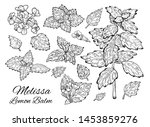 big ink melissa hand drawn set. ... | Shutterstock .eps vector #1453859276