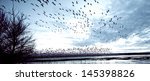 Many Birds Taking Flight In The ...