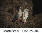White Doves Residing At...