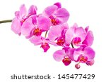 Pink Orchid On A White...