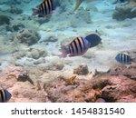 underwater view of a school of...   Shutterstock . vector #1454831540