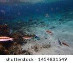underwater view of small orange ...   Shutterstock . vector #1454831549