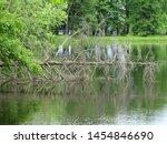 Lake, Brunet Island State Park, Wisconsin, June 2016