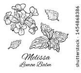 ink melissa hand drawn set....   Shutterstock .eps vector #1454868386