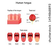 Taste Bud And The Papillae Of...