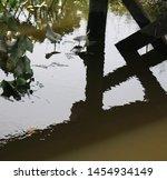 Spatterdock Under A Bridge In ...