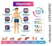 homeostasis vector illustration....   Shutterstock .eps vector #1455168950