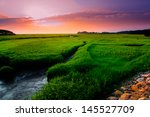 marsh at sunset | Shutterstock . vector #145527709