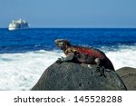 Marine Iguana Tanning On Rock ...