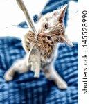 Stock photo playing juvenile european shorthair cat 145528990
